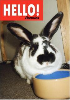 Hello! Bunnies